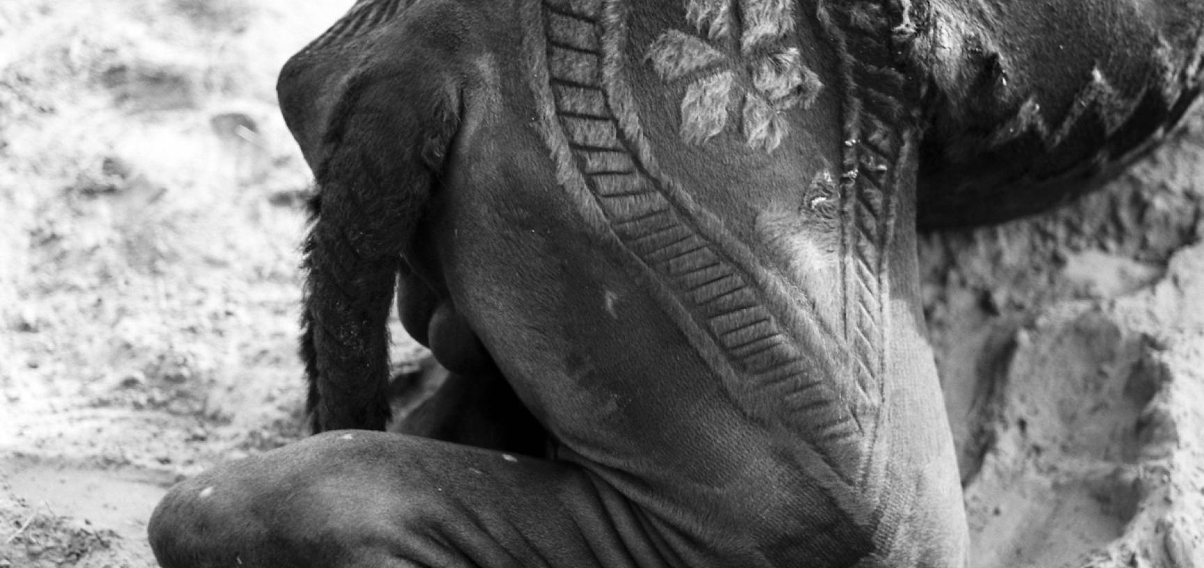 Black and white photograph of the decoration on the body of a camel