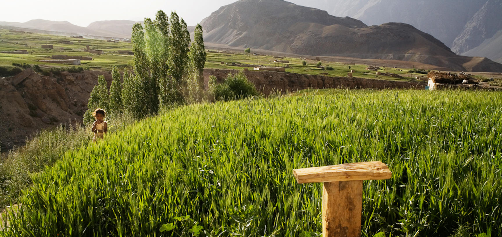A field of wheat, irrigated by snow-melt from the nearby mountains, grows in front of a Pamiri house. Roshorv, Tajikistan. Photograph by Carolyn Drake. July 2008.
