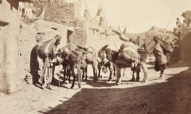 Zuni people with pack animals. Of this photograph James Stevenson noted that both men and women 'carry almost as large and heavy loads as the donkey'.
