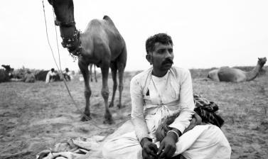 Camel herdsman