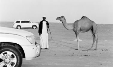 Black and white photograph of two cars, and a man holding a camel