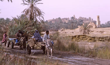 A road cuts through a desert landscape with date trees.  Two carts are drawn by donkeys. Two people sit on the first vehicle followed by a second cart driven by one man.