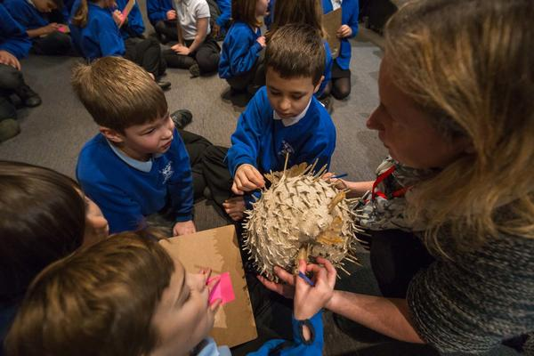 Primary school pupils sit on floor and handle an ivory coloured, oval-shaped helmet with long spikes protruding from all around it