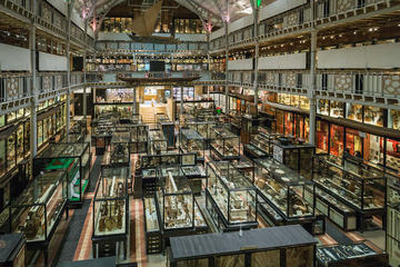 pitt rivers by ian wallman 9767 copy1